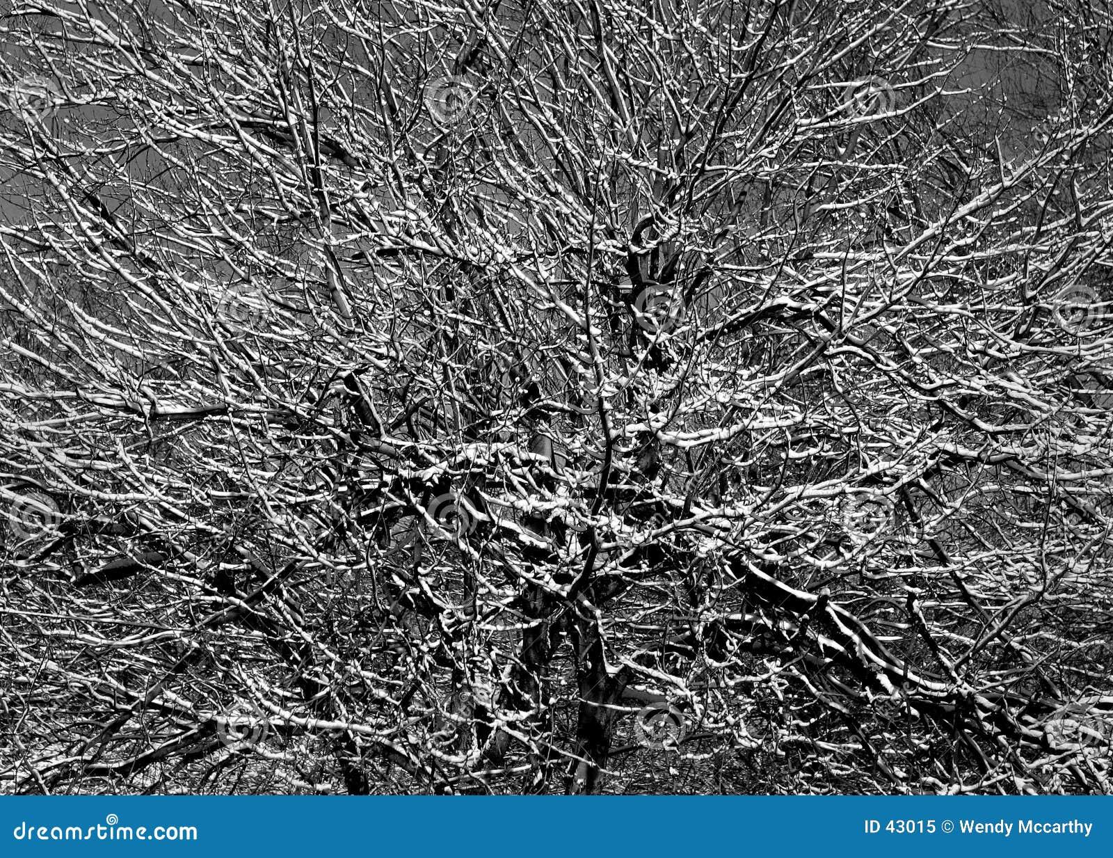 Schnee-Zweige
