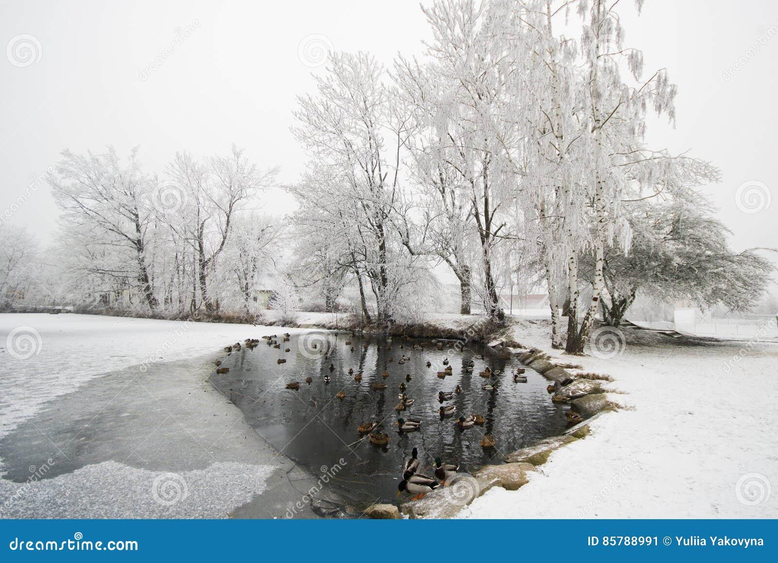 Schneebedeckter Holz- und Waldsee