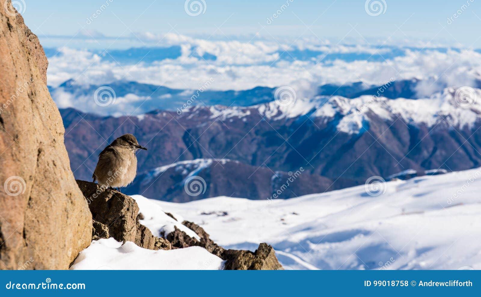 Schneespitzen und -vögel von der Spitze an EL Colorado