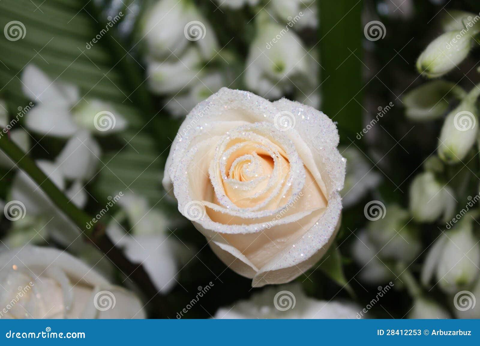 schneewittchen rose stockfotos bild 28412253. Black Bedroom Furniture Sets. Home Design Ideas