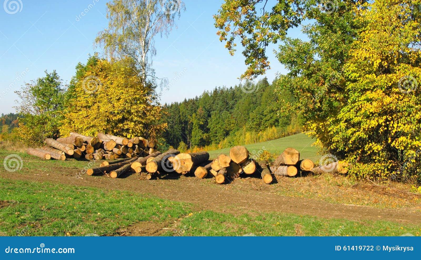 Schneiden Sie Baume In Der Herbstlandschaft Stockfoto Bild Von