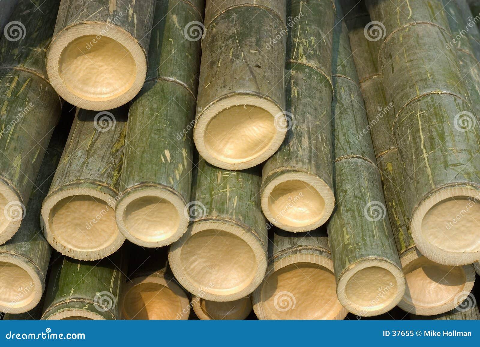 Schneiden Sie Bambo