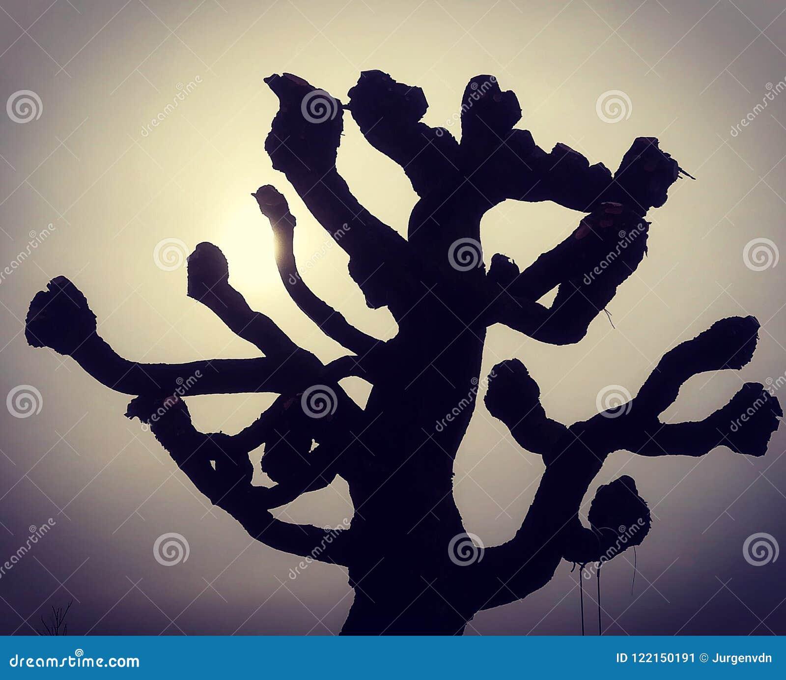 Schneiden Sie Weidenbaum In Der Aura Der Untergehenden Sonne