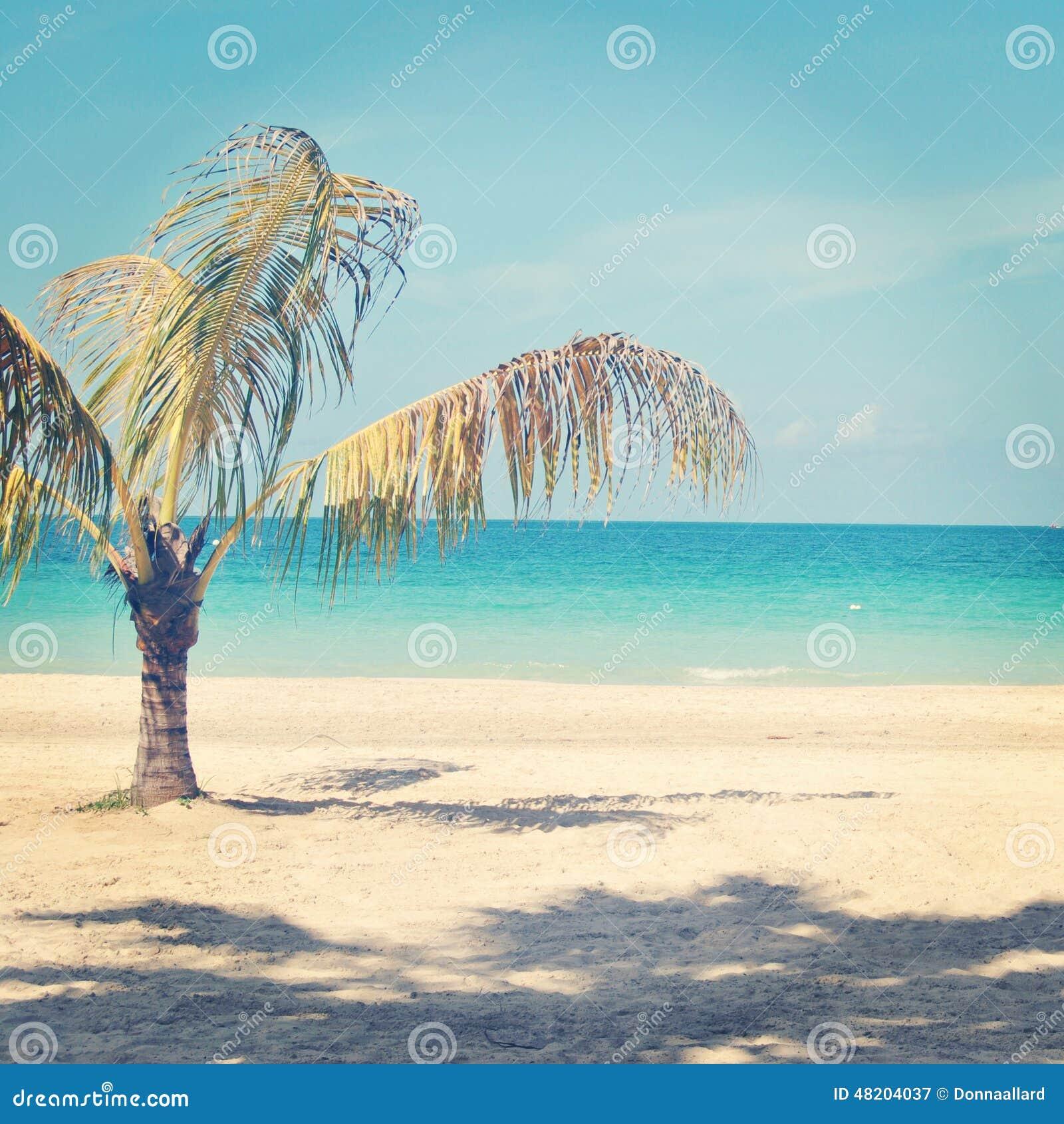 sch nes instagram der einzigen palme auf einem tropischen strand stockfoto bild 48204037. Black Bedroom Furniture Sets. Home Design Ideas