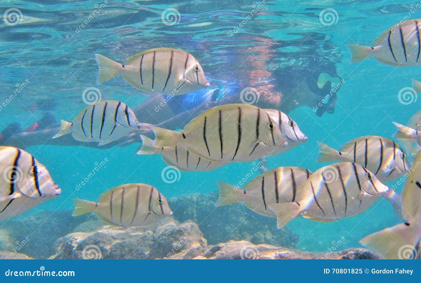 Schnorcheln mit tropischen Fischen