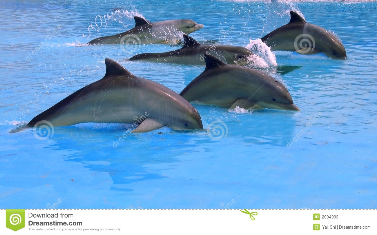 of dolphins stock photos image 2094993