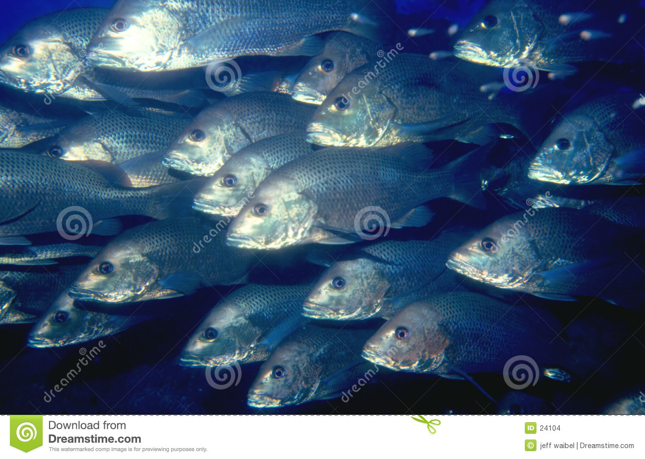 School of fish stock photo image of fishing marine for Image of fish