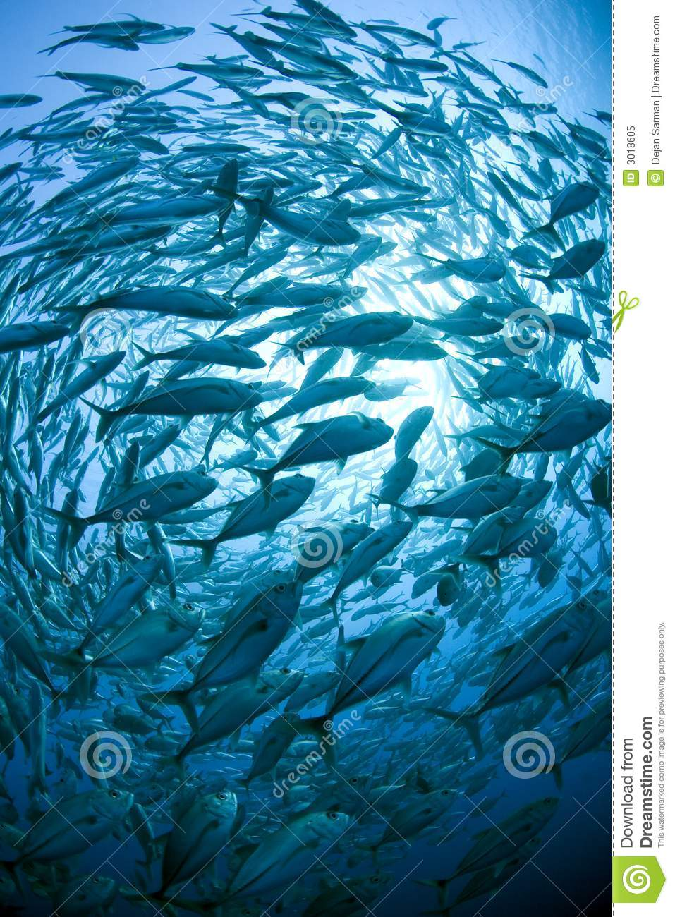 School of fish royalty free stock photo image 3018605 for Dream of fish swimming