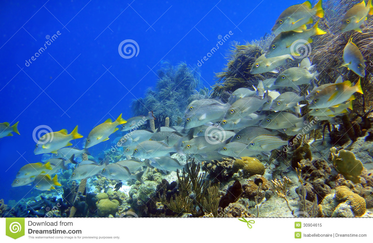 Caribbean Fish Royalty Free Stock Images Image 16689229 ...