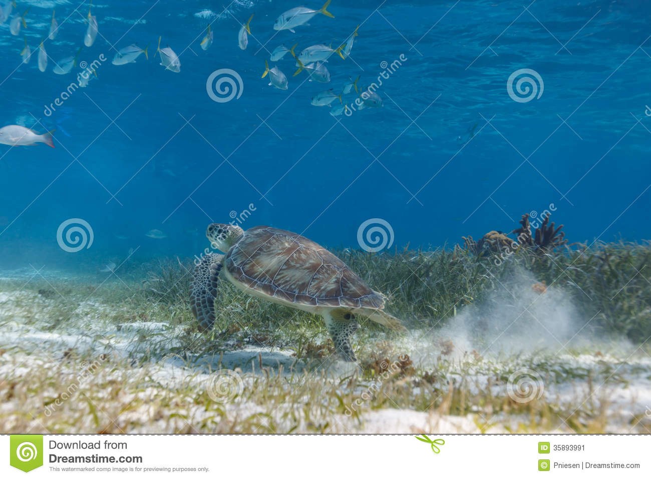 School Of Fish And Green Sea Turtle Swimming Along Ocean