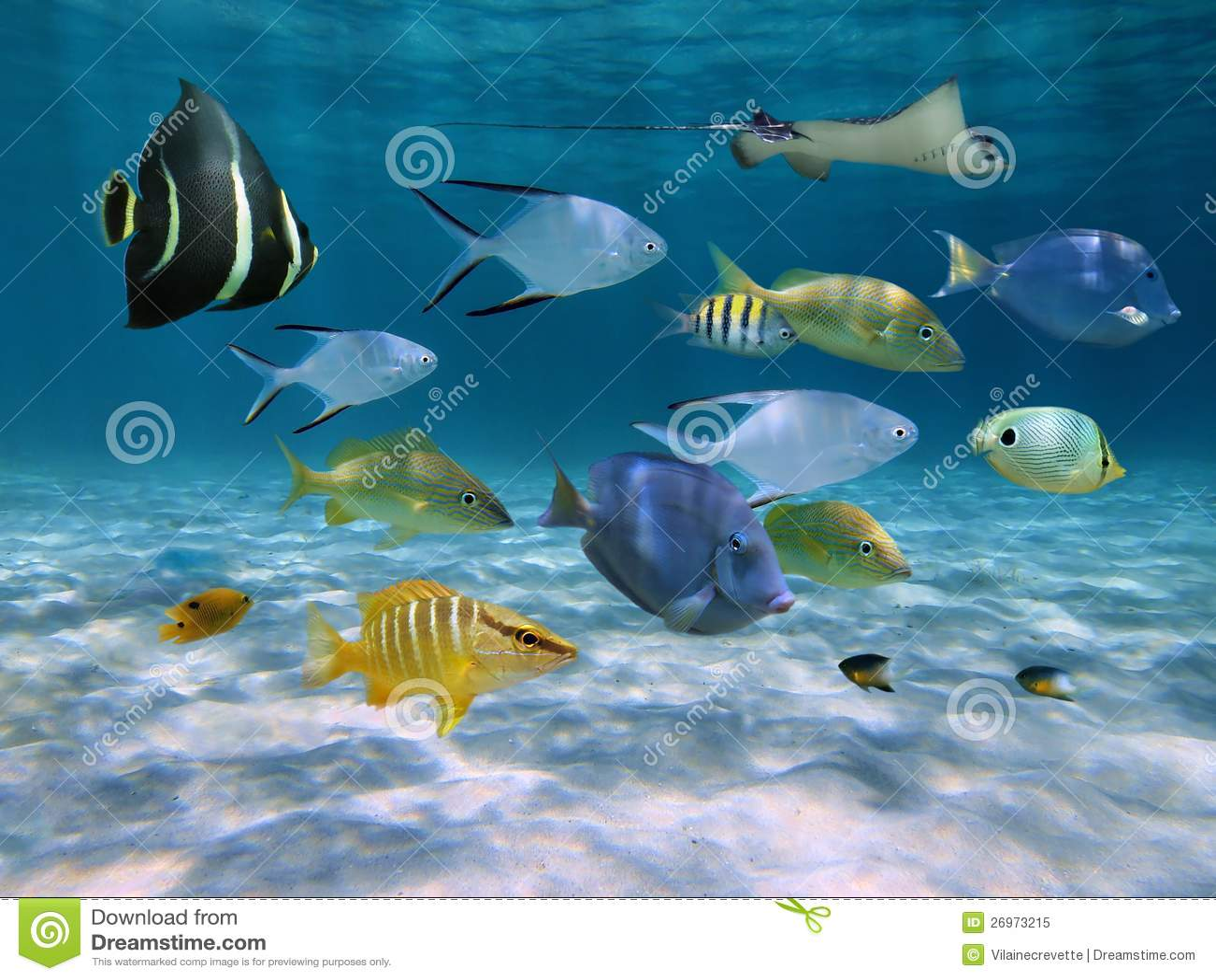 School Of Fish Over A Sandy Ocean Floor Royalty Free Stock Photo