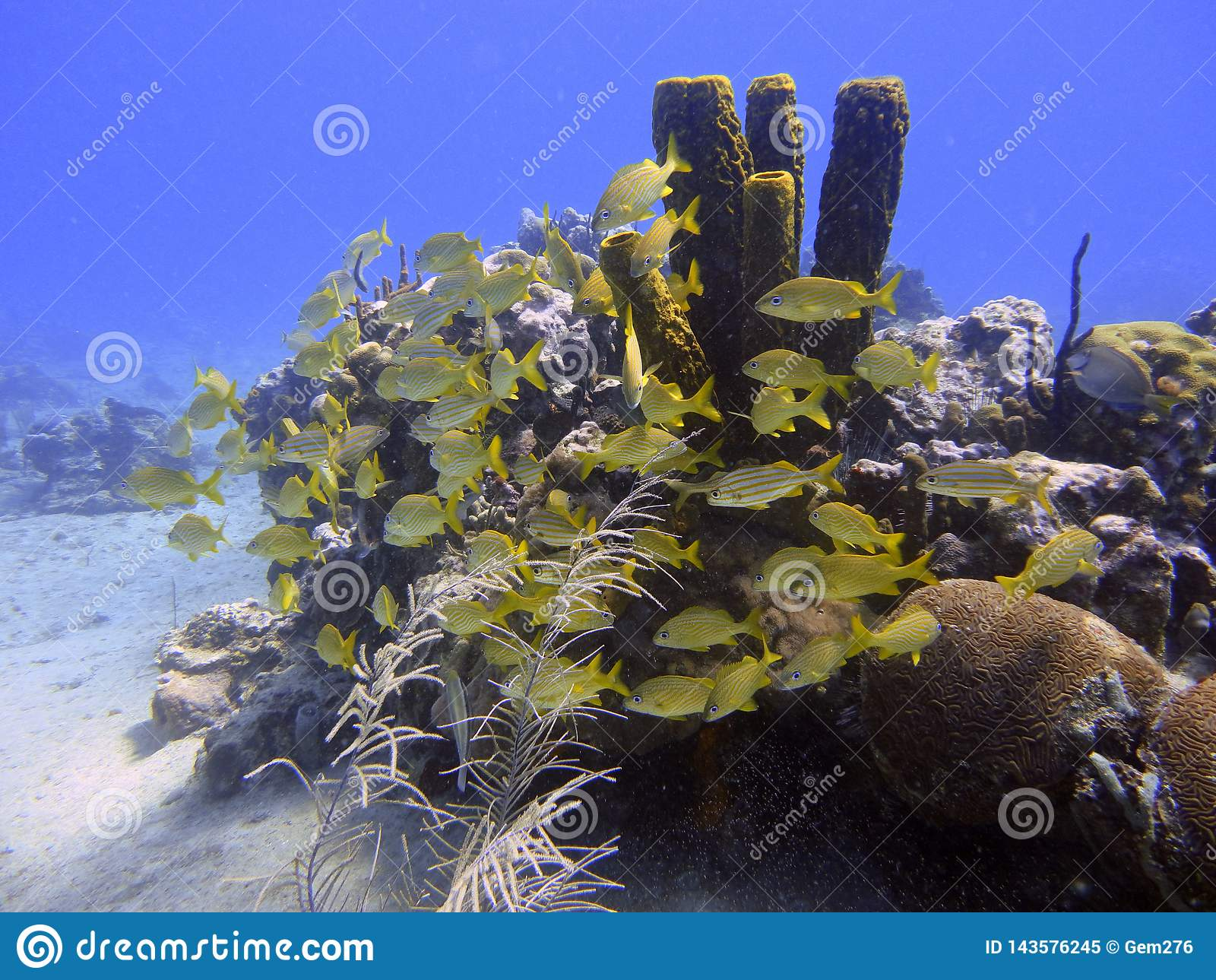 School of fish on the seabed