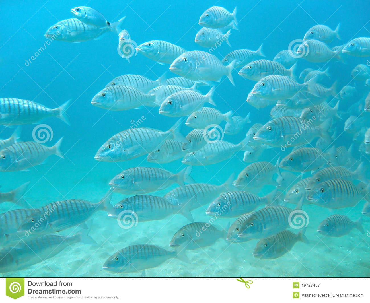 School of fish swimming royalty free stock photography for Dream of fish swimming