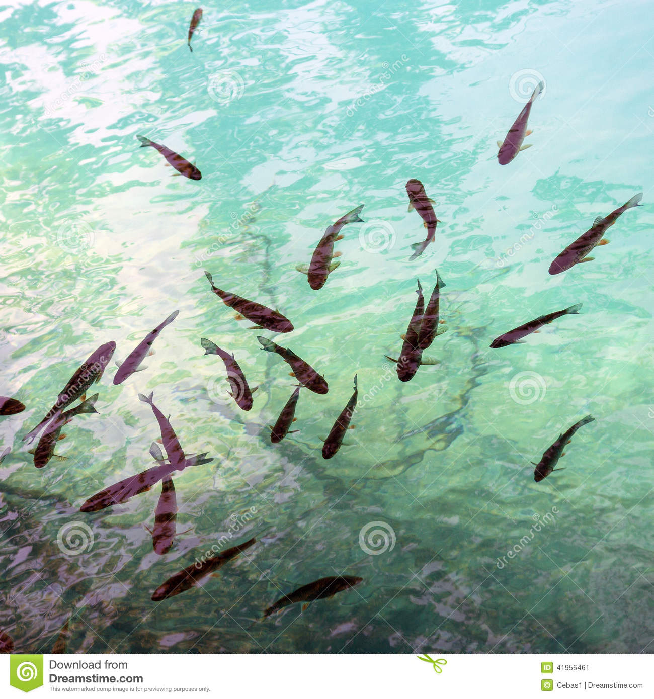 School of fish in the aquarium dangerous piranha behind for Dream of fish swimming