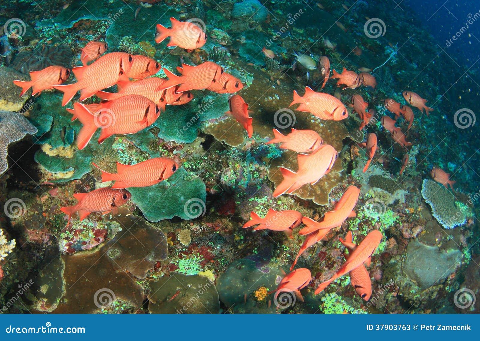 School of red fish