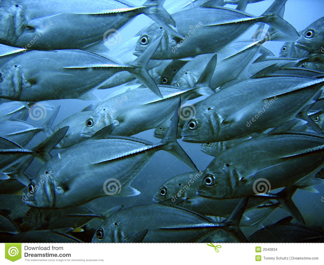 School Of Tuna Stock Images - Image: 2040834