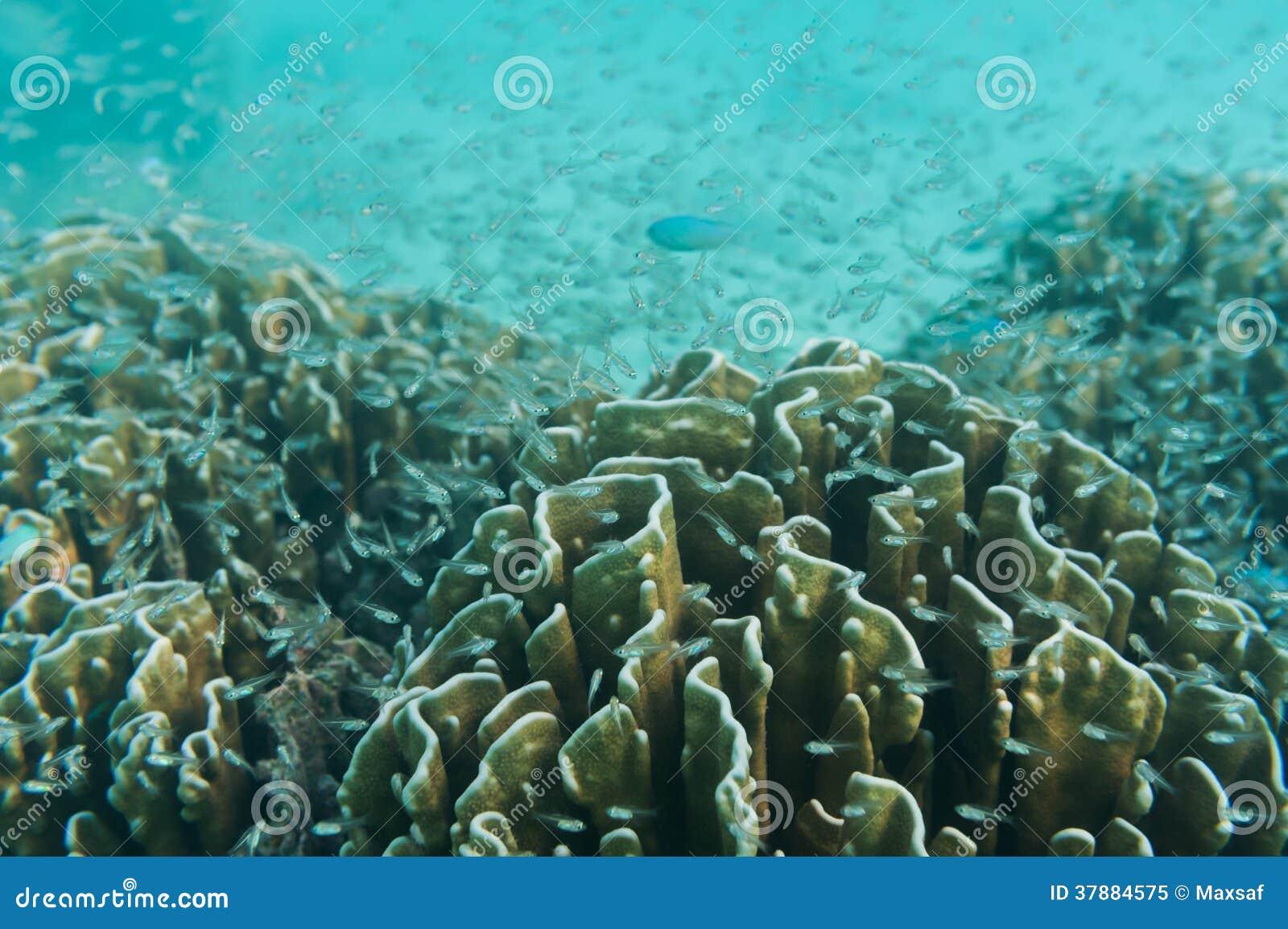 School of fish swimming near coral stock image for Little fish swim school