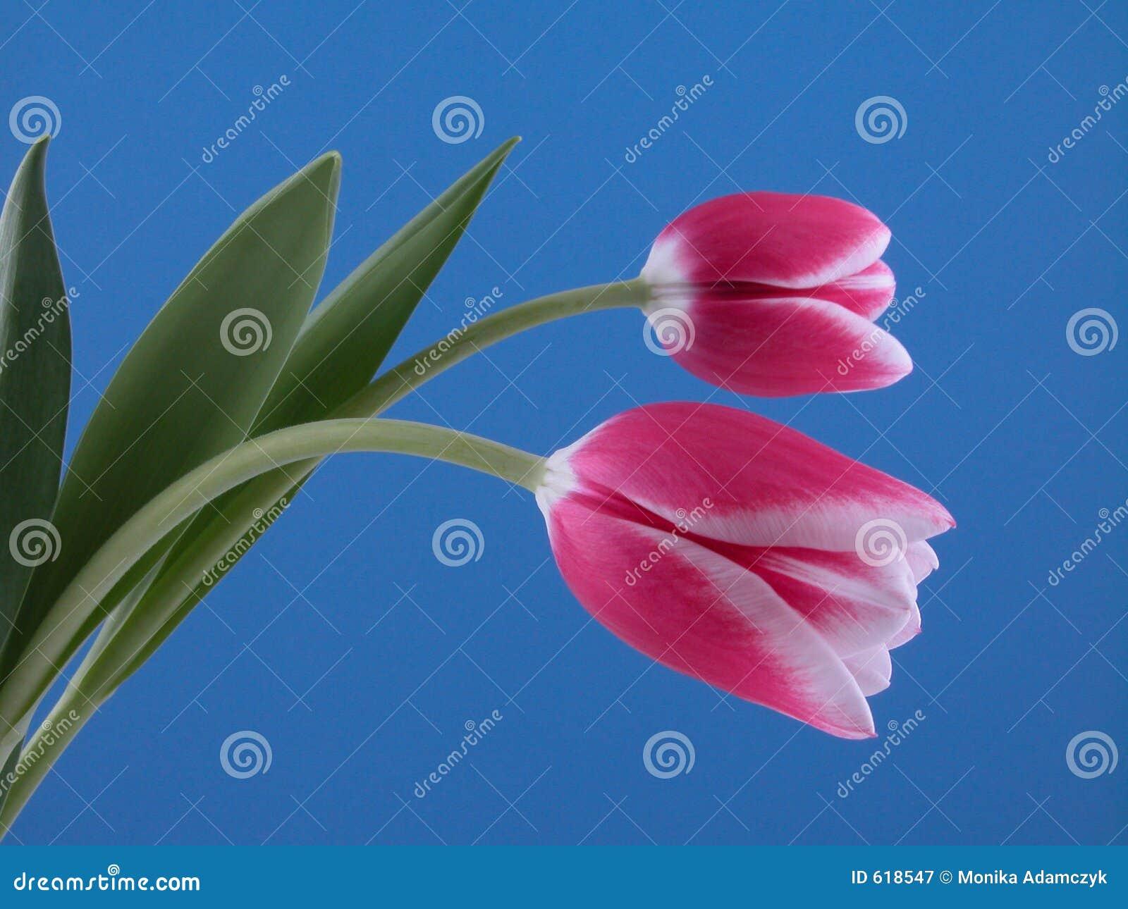 Schoonheid in roze