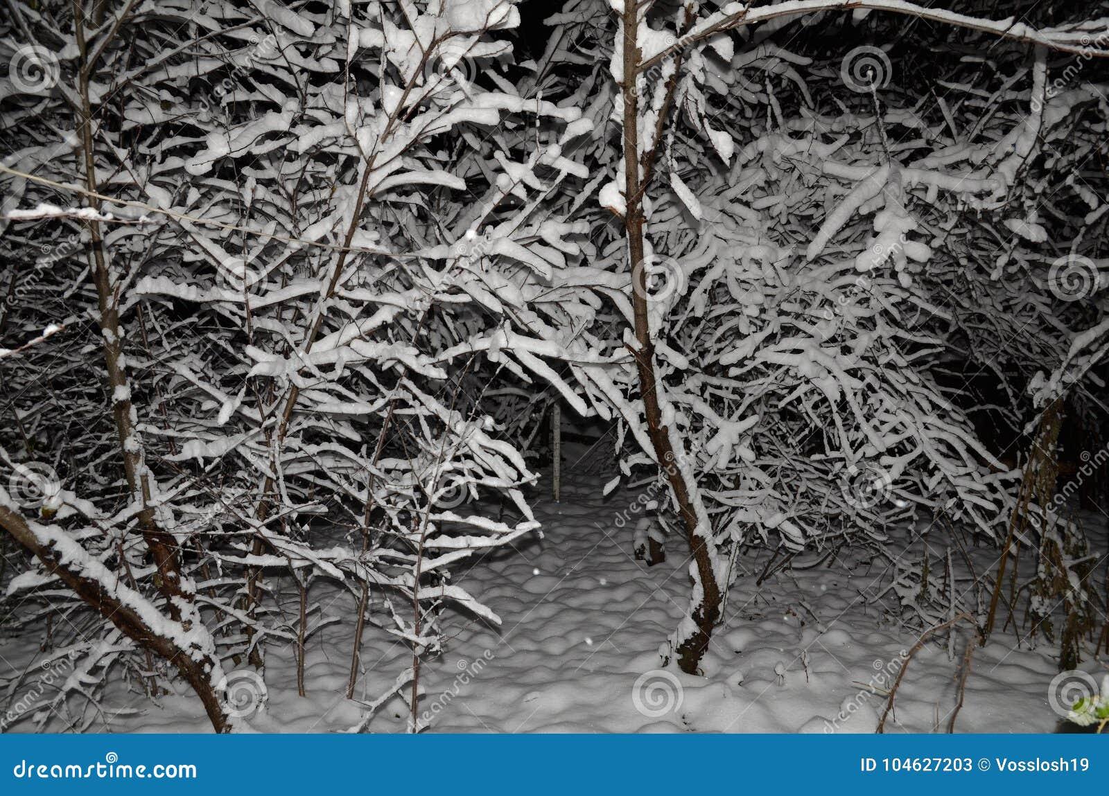 Download Schoonheids Sneeuwachtergrond Voor Uw Ontwerp Stock Afbeelding - Afbeelding bestaande uit gras, boom: 104627203