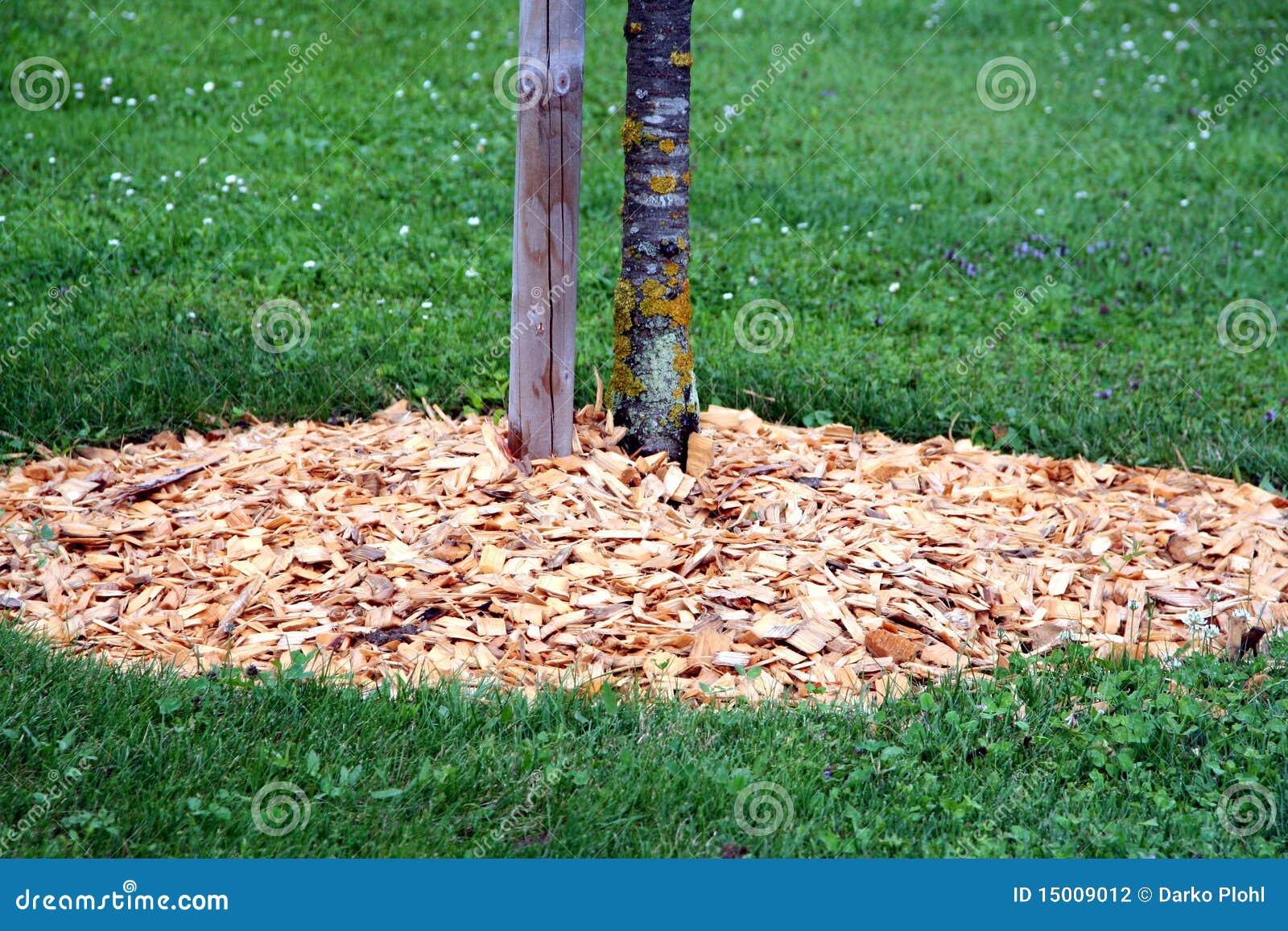 Schors rond boom