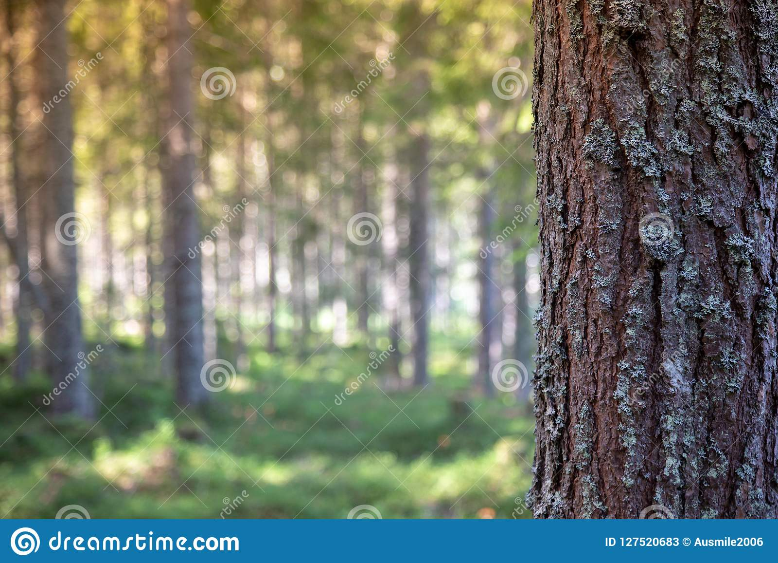Schors van boom in bos voor tekstbericht