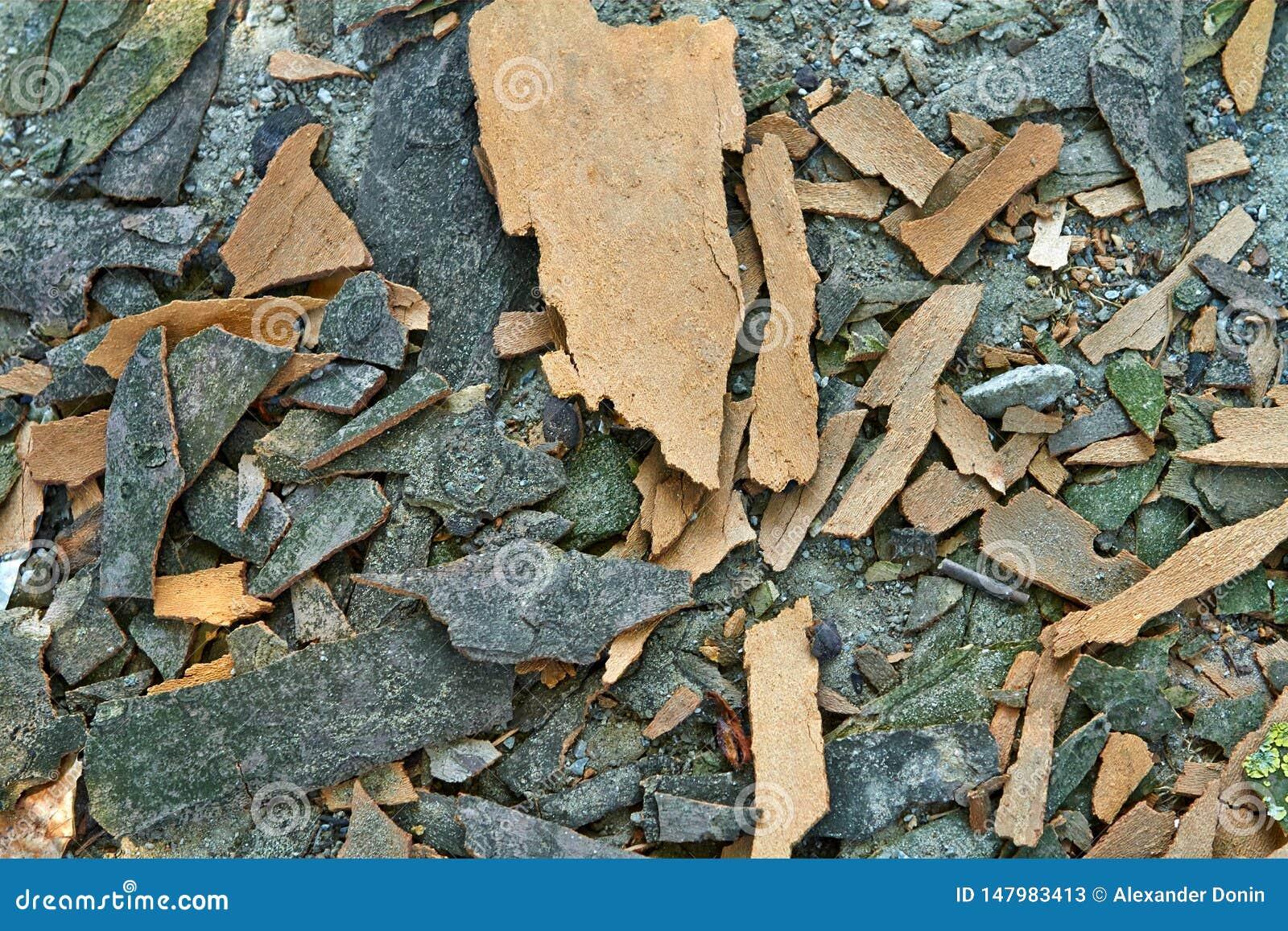 Schors van een achtergrond van de boomtextuur