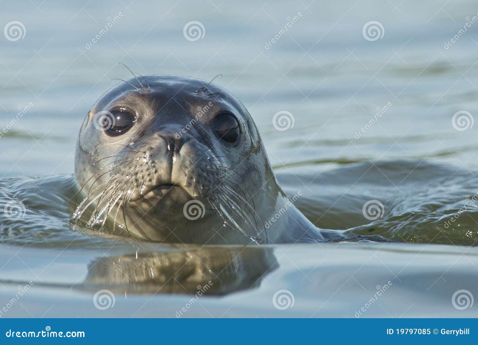 Schronienie foka