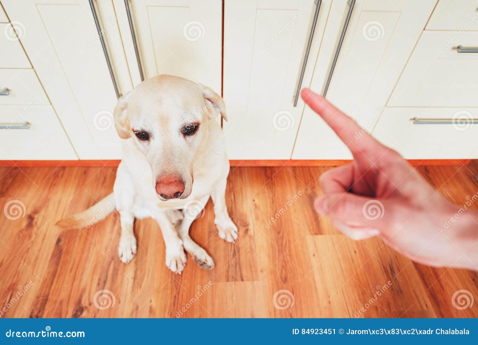 Schuldiger Hund und sein Eigentümer