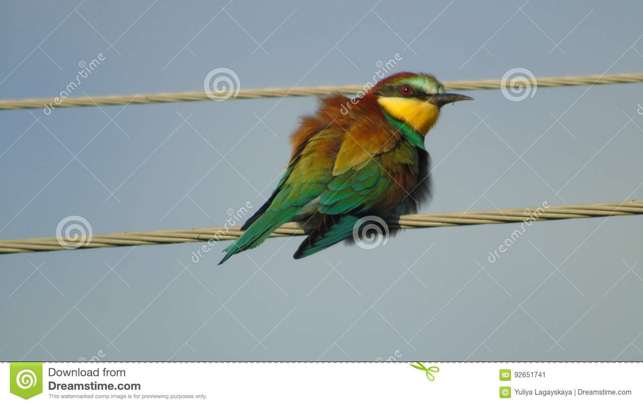 Schur Bird Sitting On A Wire Stock Image - Image of blue, fluffy ...