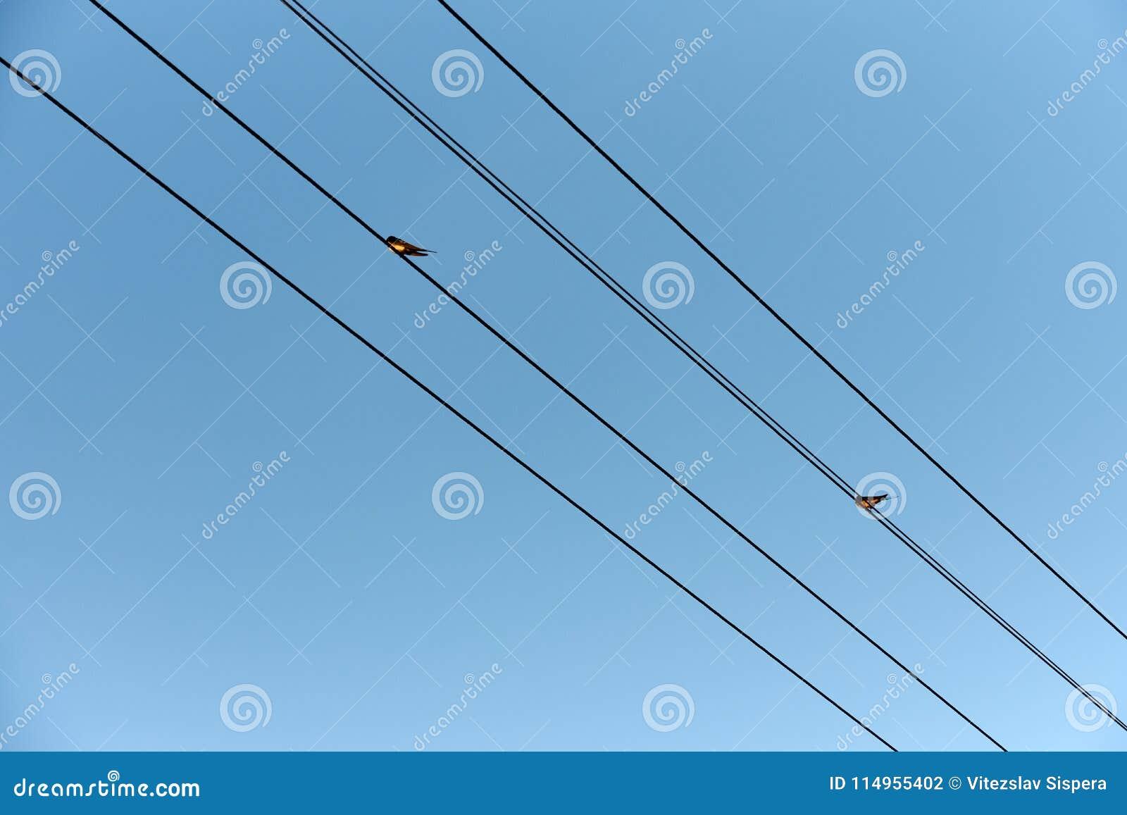 Schwalbe Zwei Die Auf Drahten Von Stromleitungen Unter Blauem