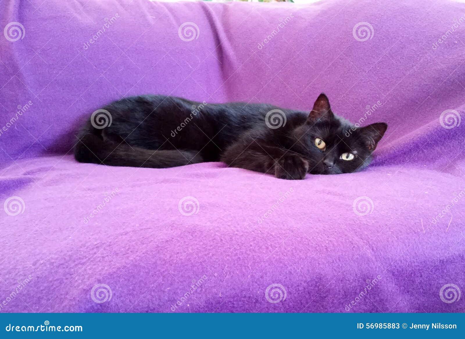 Schwarze Cat In Sofa