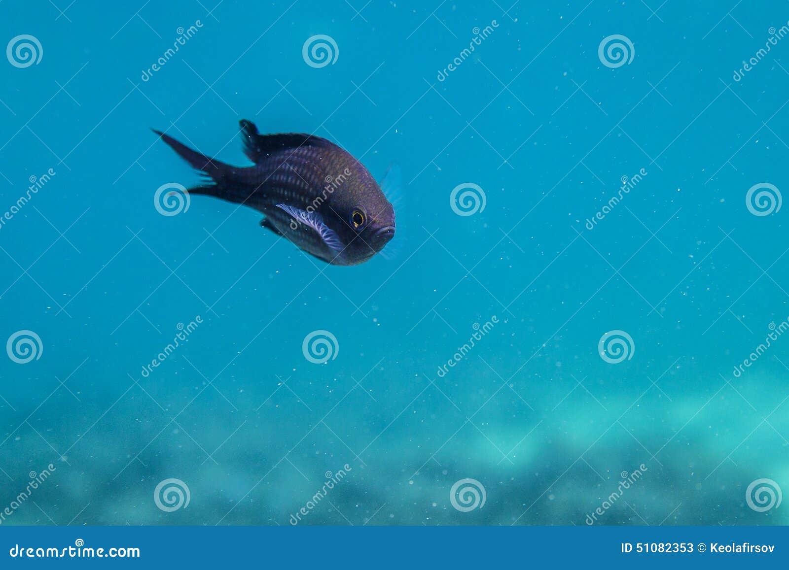 Schwarzes Meer Fische