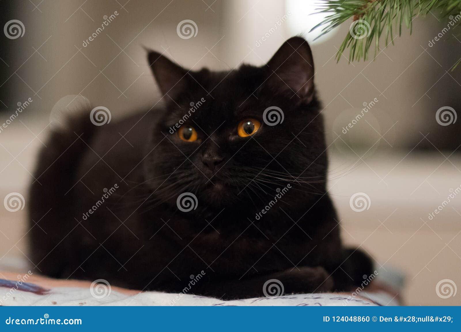Schwarze Katze, die auf dem Kissen liegt