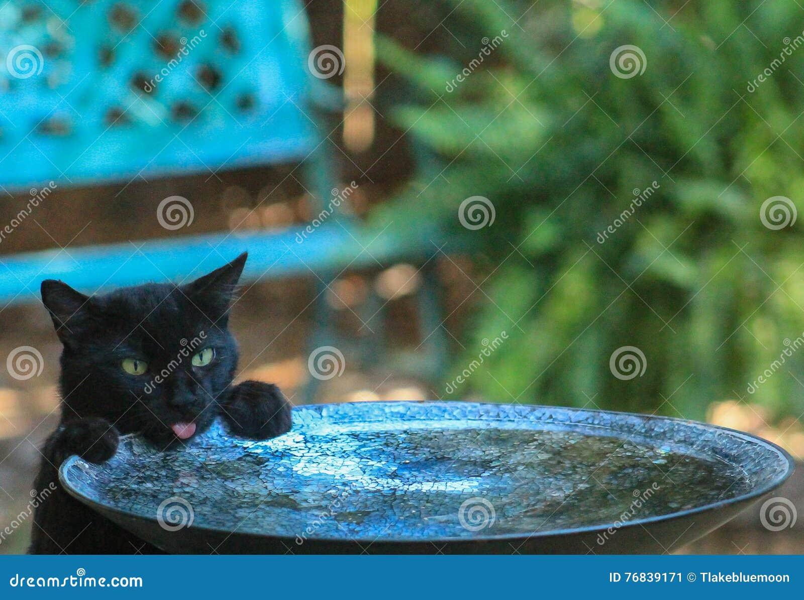 Schwarze Katze-Vogeltränke stockbild. Bild von haustier - 76839171