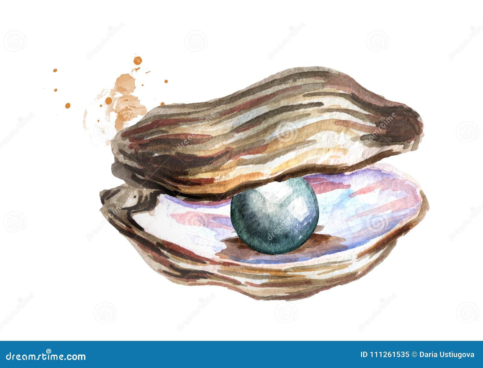 Schwarze Perle im Oberteil Übergeben Sie die gezogene Aquarellillustration, die auf weißem Hintergrund lokalisiert wird