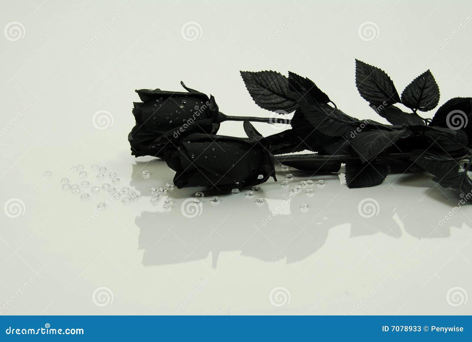 schwarze rose stockbild bild von depress tropfen stieg 7078933. Black Bedroom Furniture Sets. Home Design Ideas