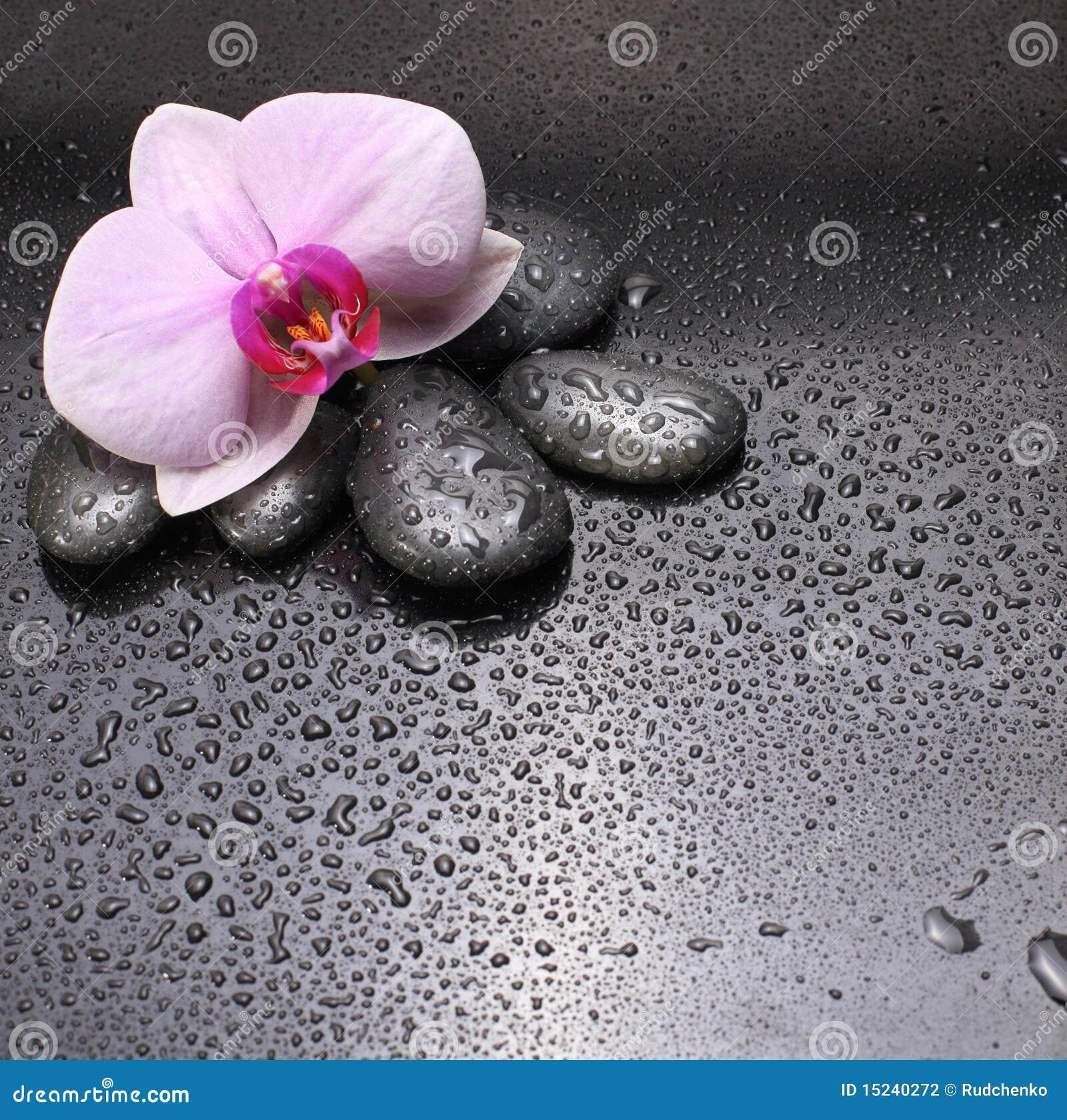 schwarze steine und orchidee stockfotografie bild 15240272. Black Bedroom Furniture Sets. Home Design Ideas