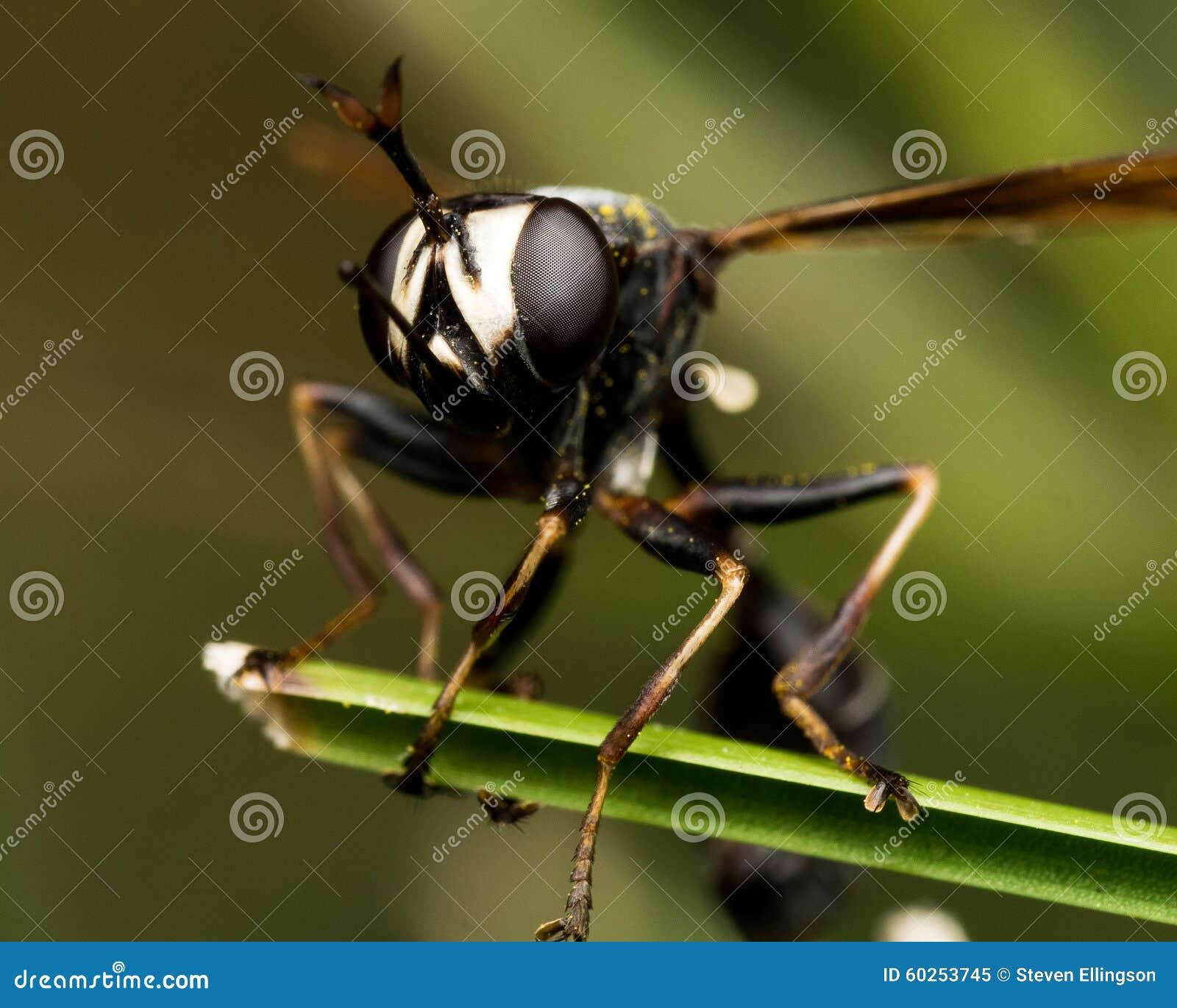 Schwarze Wespe Mit Defektem Flügel Auf Grünpflanze Stockbild Bild