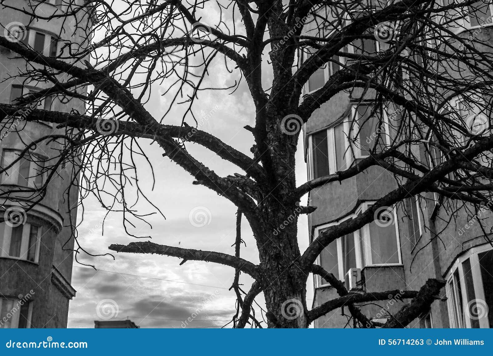 schwarzer toter baum und wohnbl cke stockfoto bild 56714263. Black Bedroom Furniture Sets. Home Design Ideas