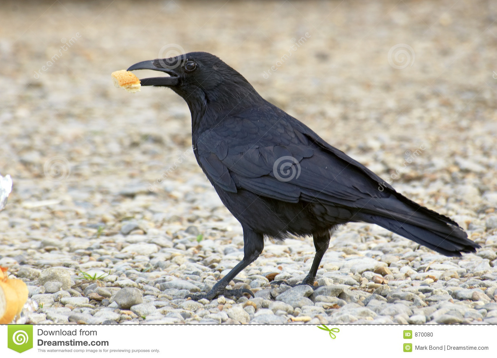Schwarzer Vogel