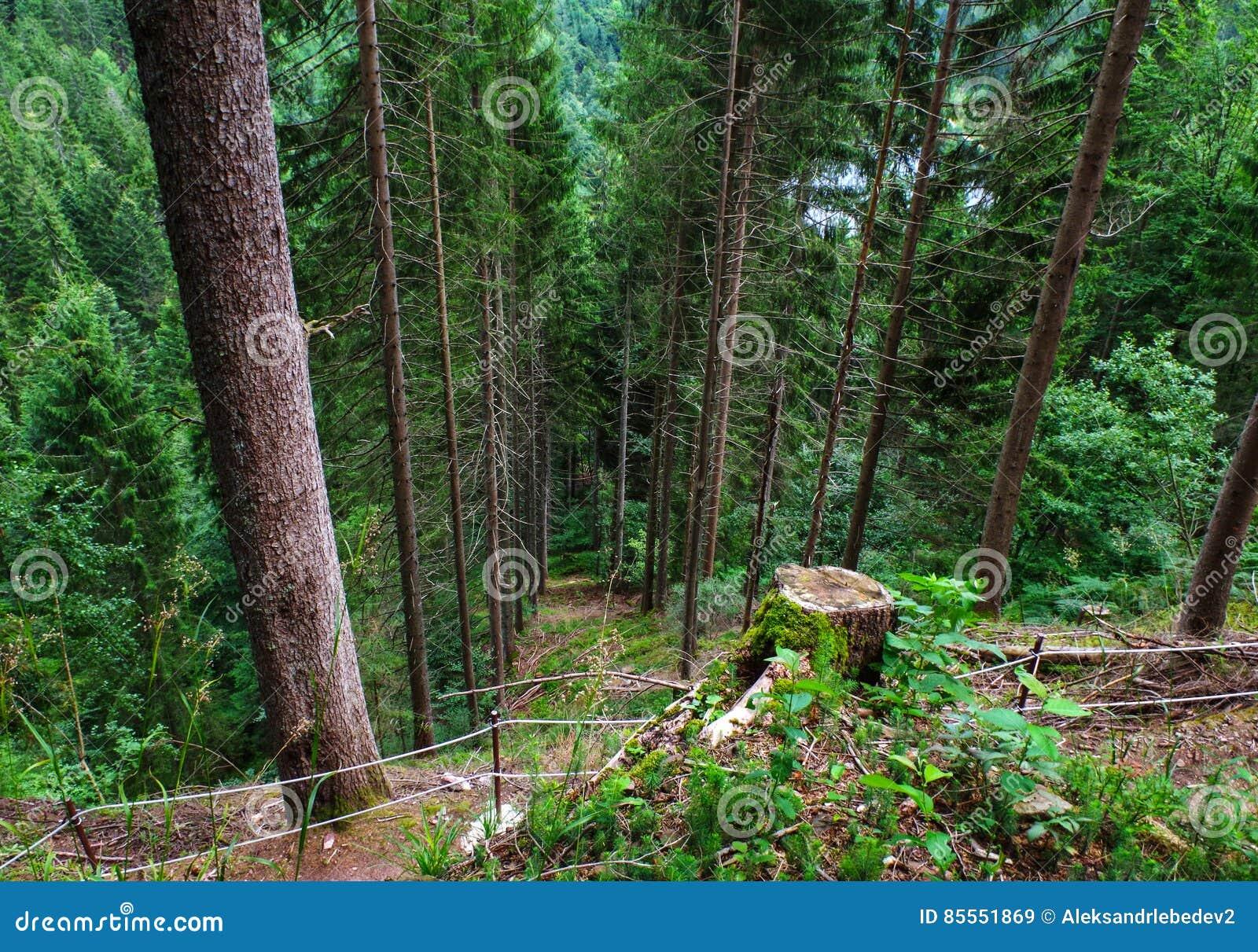 Schwarzer Wald Deutschland Schwarzwald