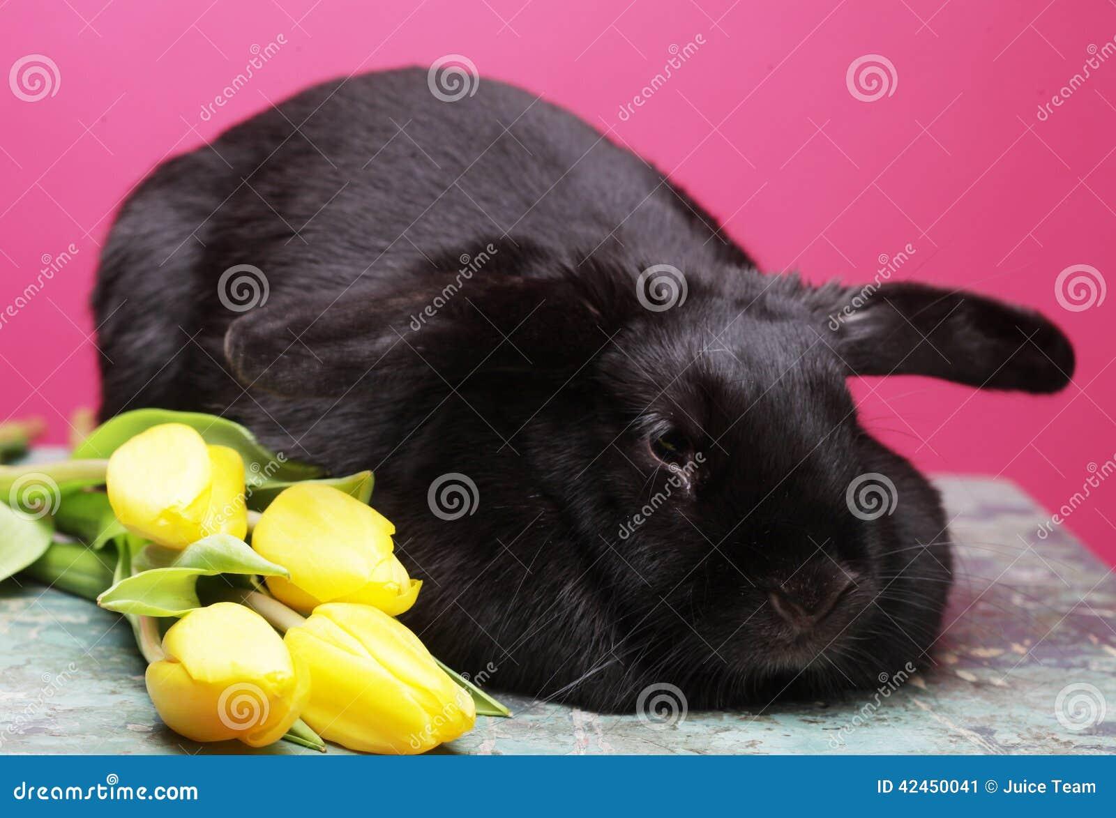 Schwarzes Kaninchen mit gelben Tulpen