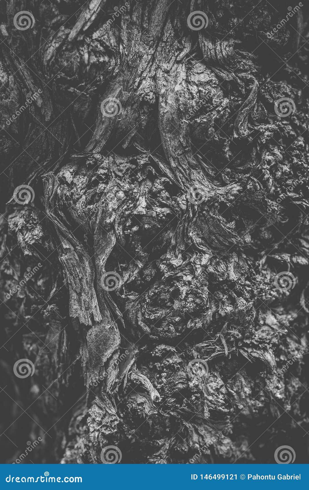 Schwarzweiss-Baumstammnahaufnahme