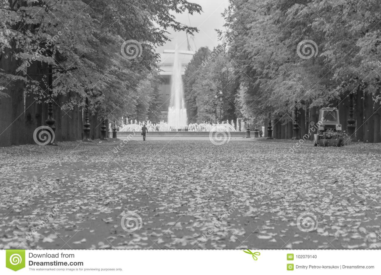 Schwarzweiss, die Straße mit gefallenen Blättern im Park im Herbst