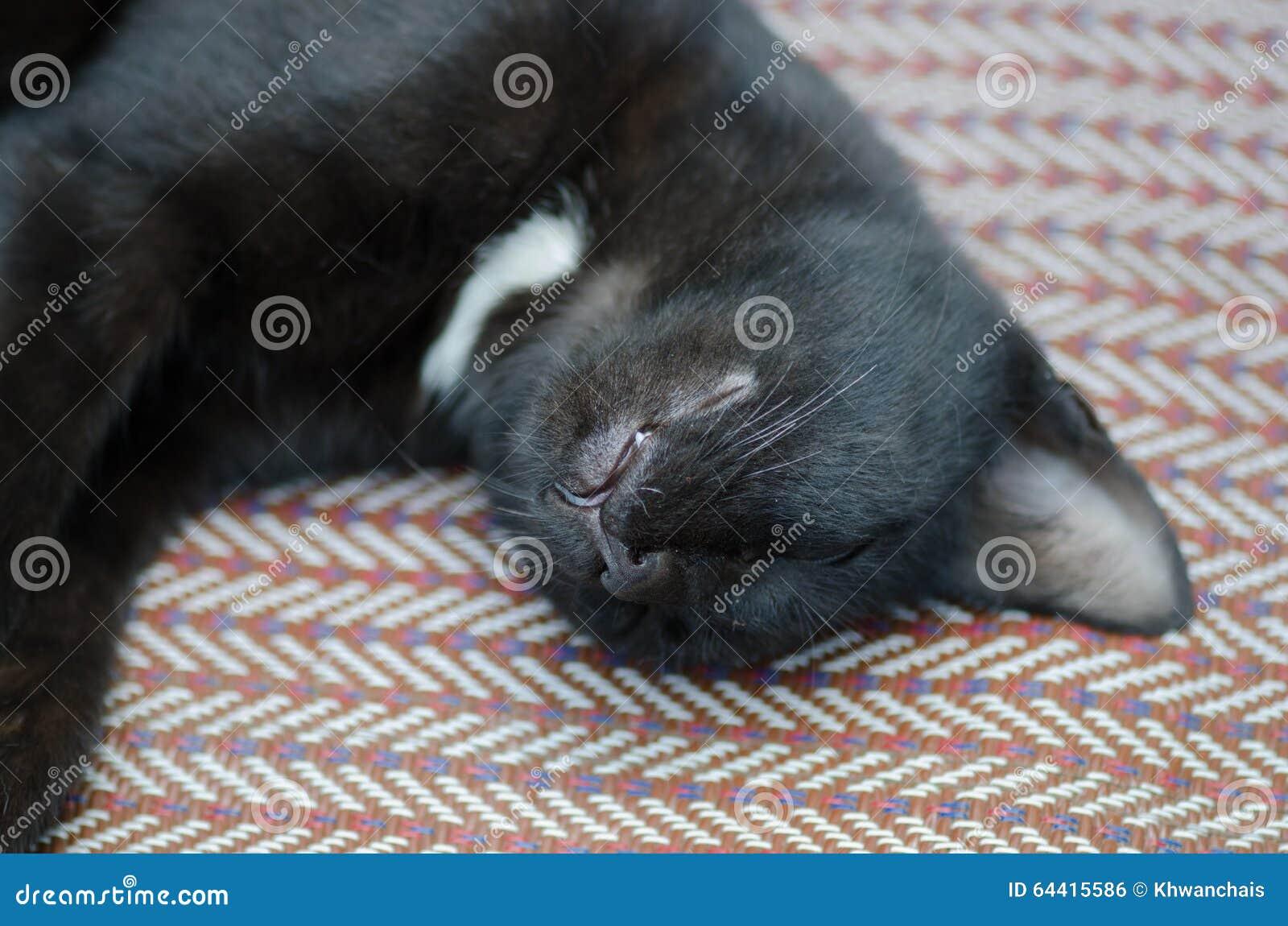 Schwarzweiss katze schläft auf dem boden katze im tiefen schlaf ...