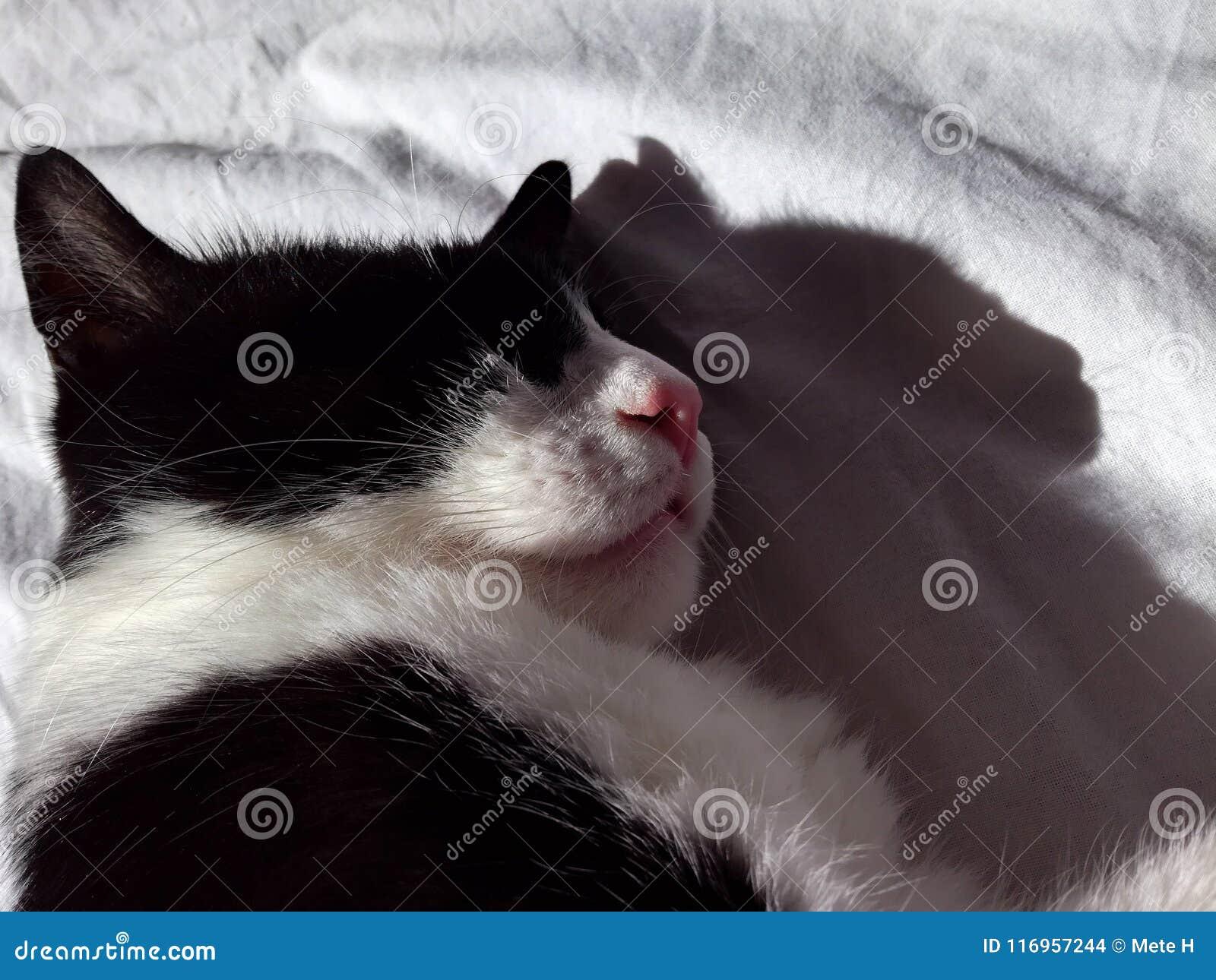 Schwarzweiss-Katzenschlaf gebadet in der Sonne
