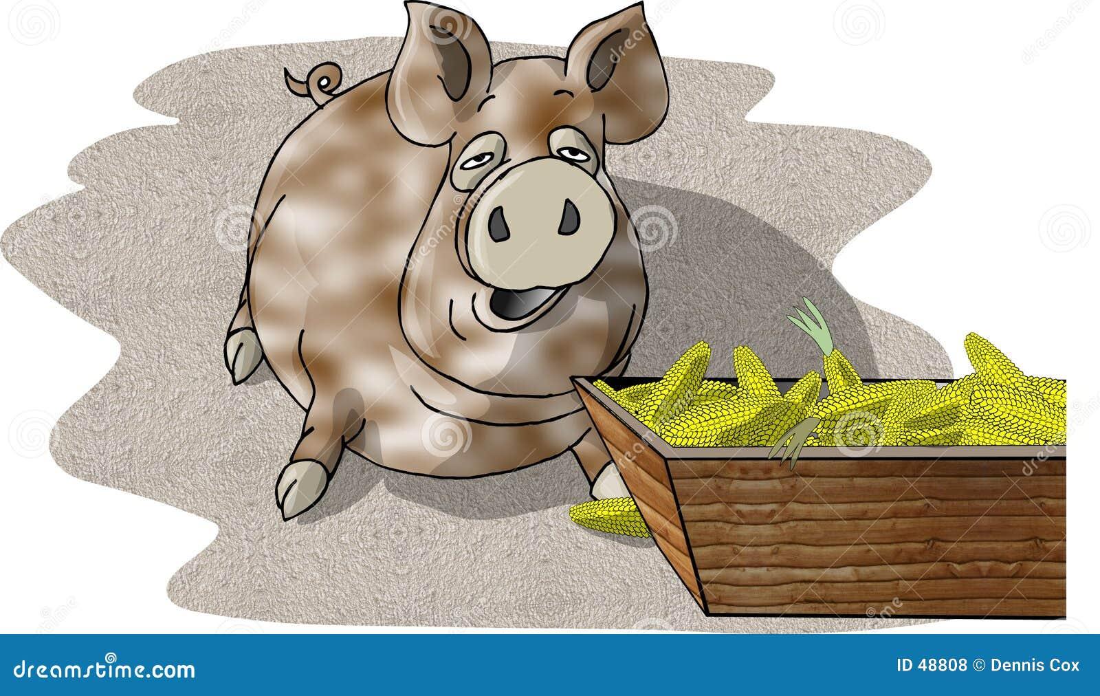 Schwein, das von einer Abflussrinne isst
