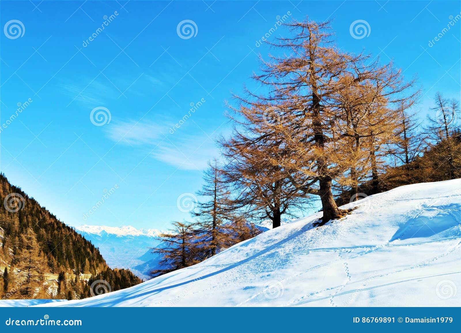 Schweizer Alpen und Winterlandschaft