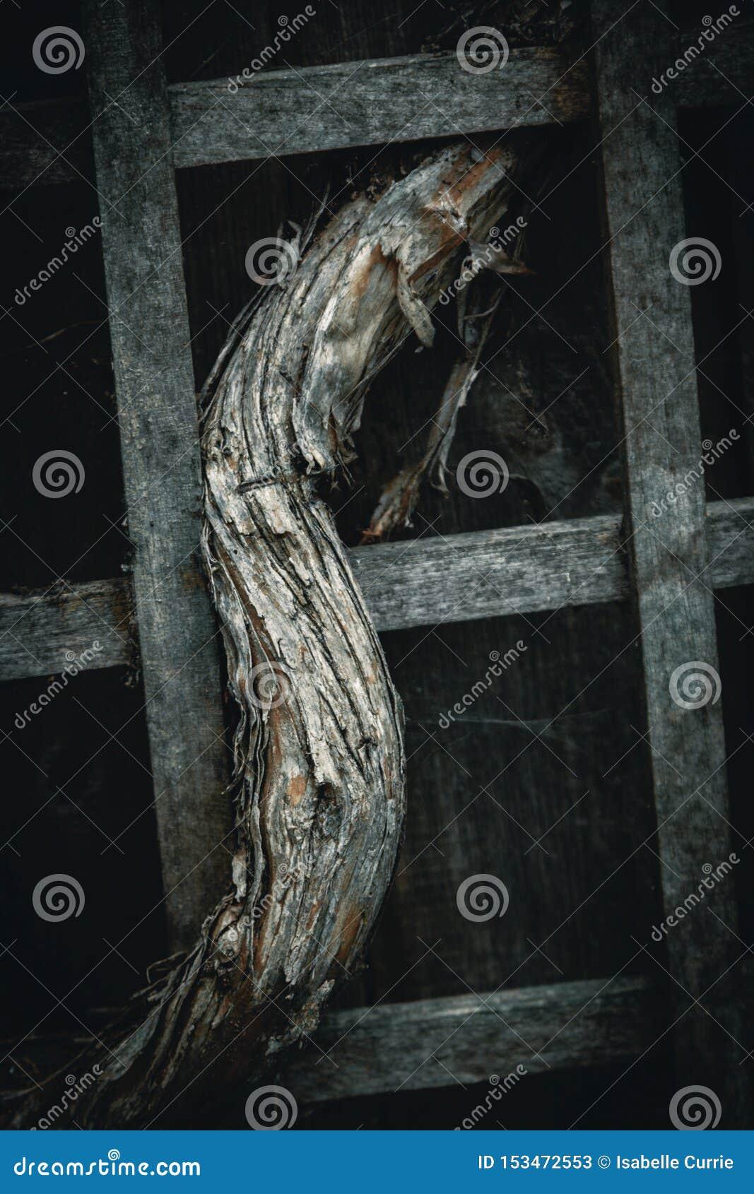Schwermütige Hintergrund Rebe im Gitter