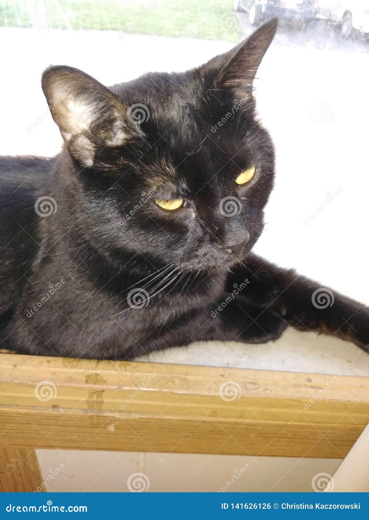 Schwermütige Katze